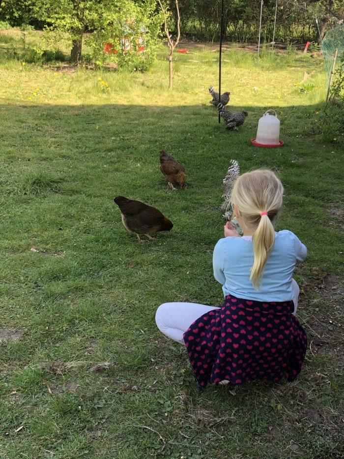 Hühner, Küken, Zierzow, Mecklenburger Landgeister
