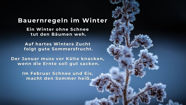 landgeister Blogbeitrag Winter, Frost und Garten